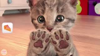 Little Kitten My Favorite Cat - Baby Learn Colours And Play Kitten Animation Pet Care Learning Games