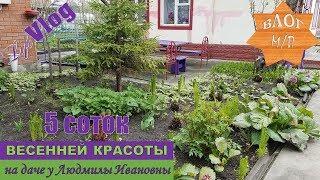 5 соток весенней красоты на даче у Людмилы Ивановны.