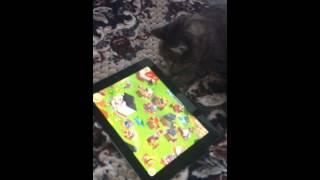 Кот играет на планшете