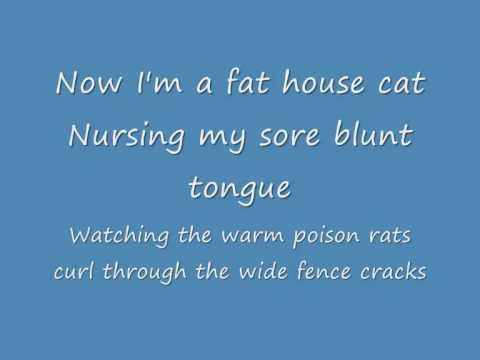Flightless Bird, American Mouth Lyrics