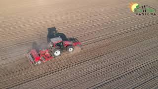 Siew pszenicy KWS Emil - Elitarny materiał siewny do reprodukcji nasion