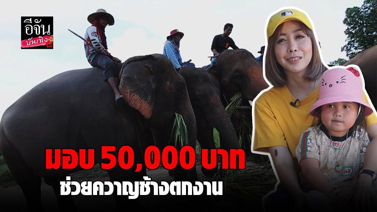 มอบ 50,000 บาท ช่วยควาญช้างตกงาน #หนึ่งบางปู