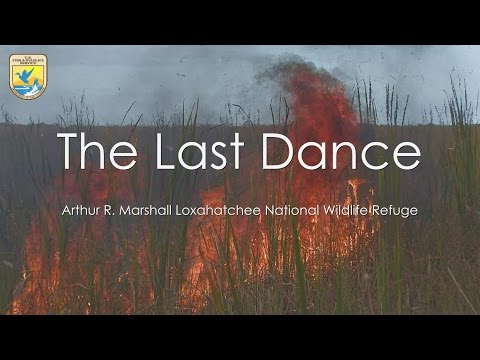 The Last Dance Fire: Loxahatchee National Wildlife Refuge