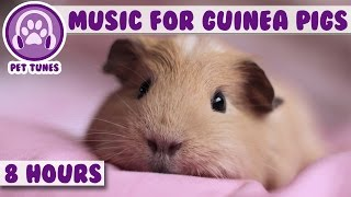 8 Hour Music Video for Guinea Pigs! Natural Stress and Anxiety Relief for Guinea Pigs!