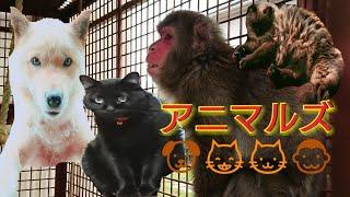 モッチ 茶太郎 クロ ミミ イイネコメントチャンネル登録よろしくお願い...