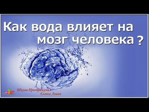 Как вода влияет на мозг человека? Елена Леваи