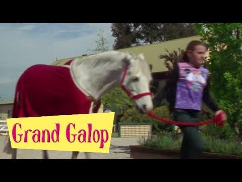 Grand Galop 113 - Quand l'amour s'en mêle | HD | Épisode Complet