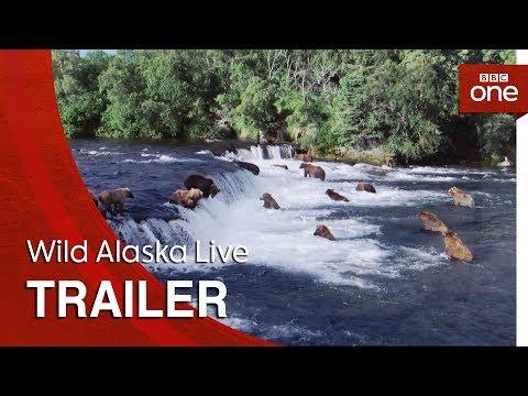 Download Youtube: Wild Alaska Live: Trailer - BBC One