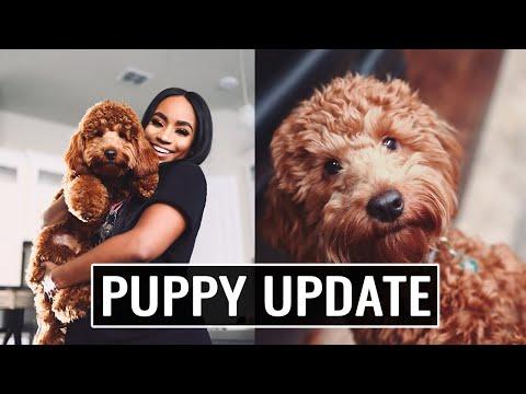 Puppy Update -- Coop The Dood Is 1, Breeder Info, Training Tips Etc... | JaLisaEVaughn