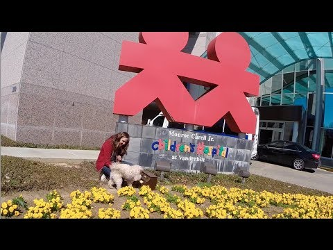Dog friendly Nashville, TN - Adventures with Maggie and Whistle