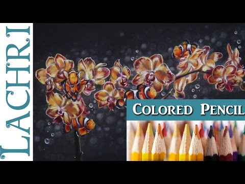 Blending Colored Pencil & Powder Blender Orchids & Clownfish Painting Tutorial  -  Lachri