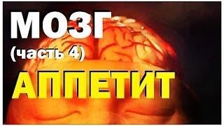 Галилео. Мозг (часть 4): Аппетит