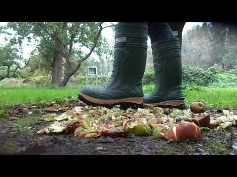 Cofra Thermo Boots food stomp, trampling apples in orchard
