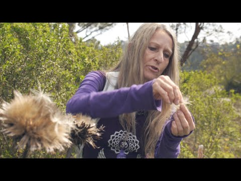 How To Find Edible Wild Herbs - Brigitte Mars on Backbar Sessions