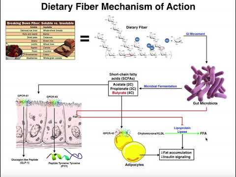What are the Physiological Mechanisms of Dietary Fiber?