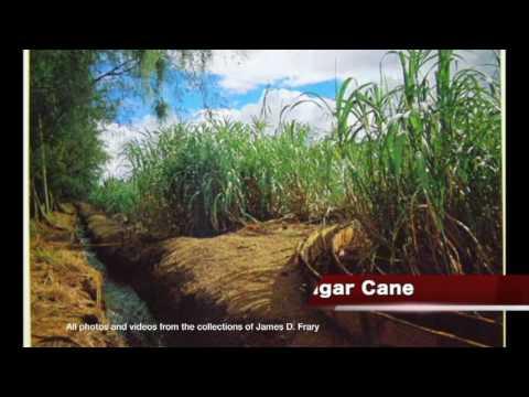 Modeling a Sugar Cane Railroad