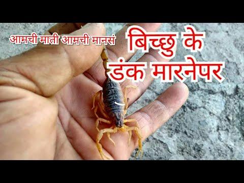 प्रत्यक्षात विंचु चावल्यावर,vinchu chvlyavar pratykshat ,ayurvedic aushadha ,