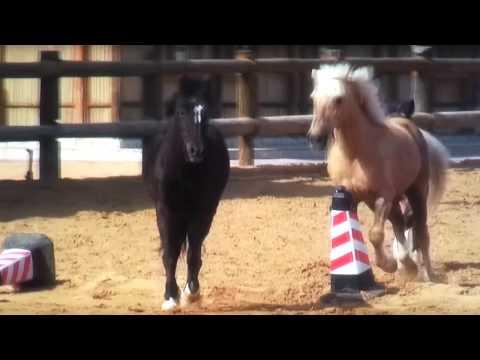 Hybrid Horse Donkey Mating With Burro Funnydog Tv