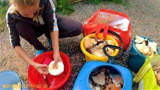 Дела осенние в деревне. Грузди. Борщевая заправка. Урожай картошки.
