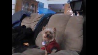 gave benadryl to the dogs