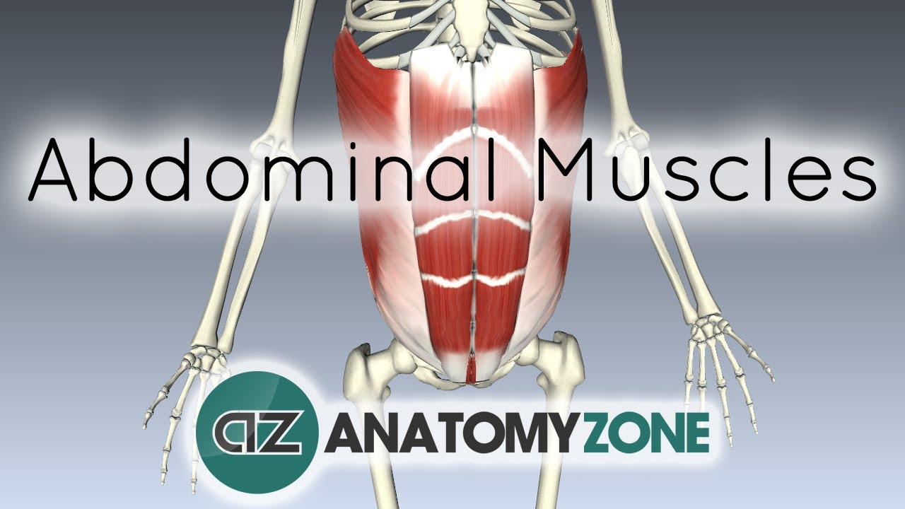 Muscles of the Anterior Abdominal Wall - 3D Anatomy Tutorial - YouTube