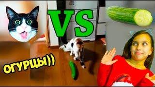 КОТЫ vs ОГУРЦЫ! НЕ ЗАСМЕЙСЯ ЧЕЛЛЕНДЖ с КОТАМИ Попробуй не засмеяться Валеришка Cats vs Cucumbers