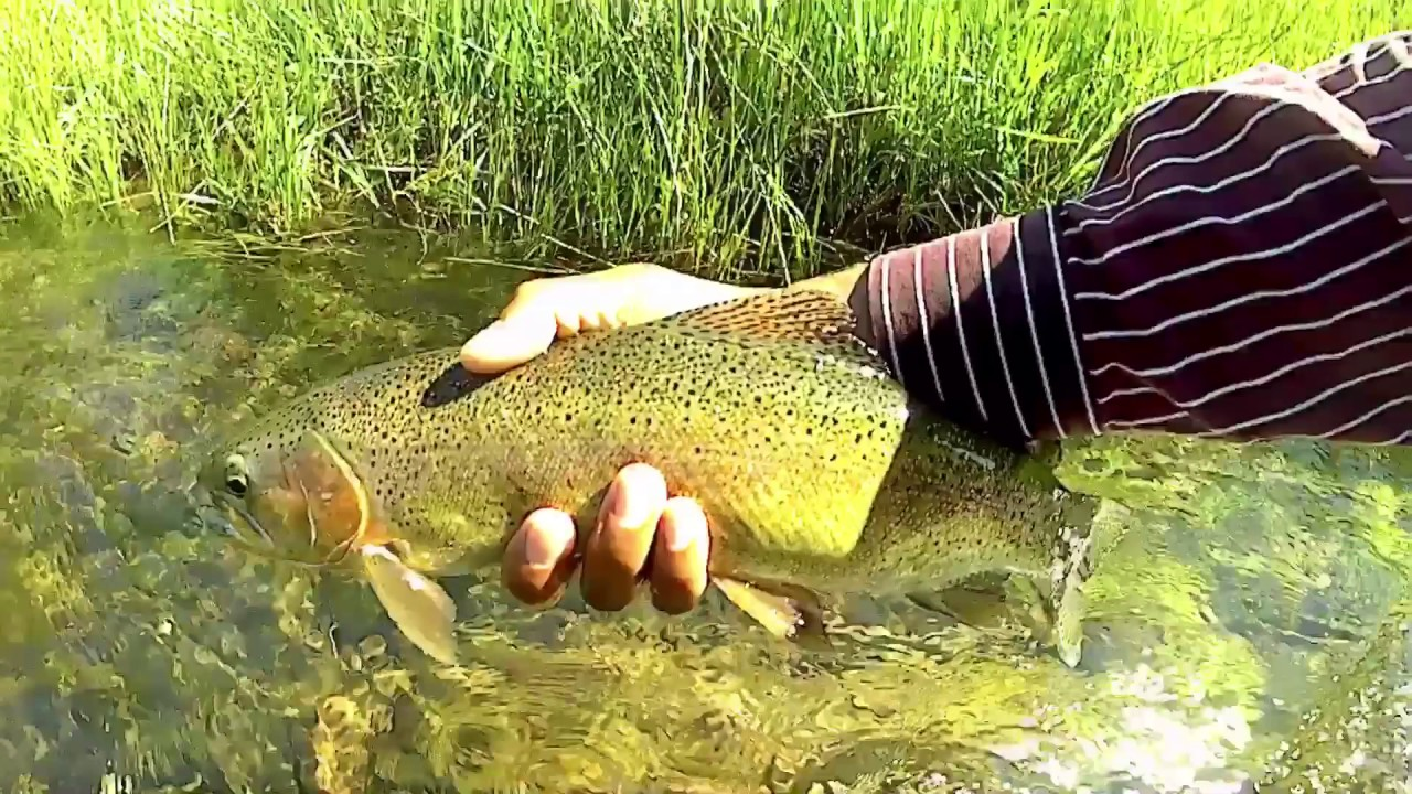 Northern california fly fishing pt 2 july 2017 youtube for Trout fishing northern california