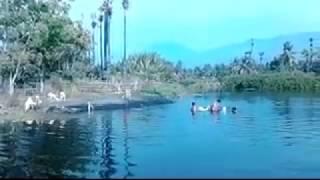 Cara Unik Mandiin Kambing Di Sungai Pantai Ketapang