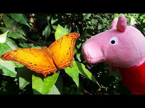 Вопрос: Как выпустить салют из бабочек, чтобы все бабочки выпорхнули?