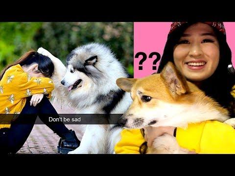 Hilarious and CUTE Dog Snapchats!