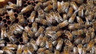 Dans les coulisses de Balexert -  A la rencontre des abeilles du centre