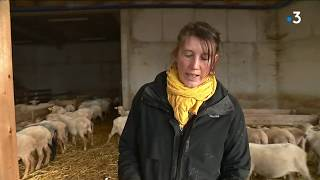 Une étudiante en droit devenue bergère à Taninges