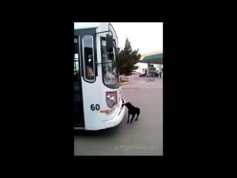 Perros piqueteros
