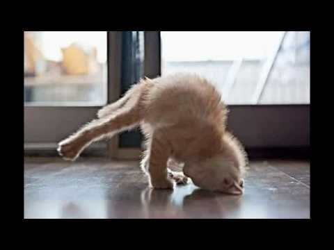 funny video ever seen in the world  funny animal yoga
