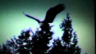 Steve Bell - Wings of an Eagle