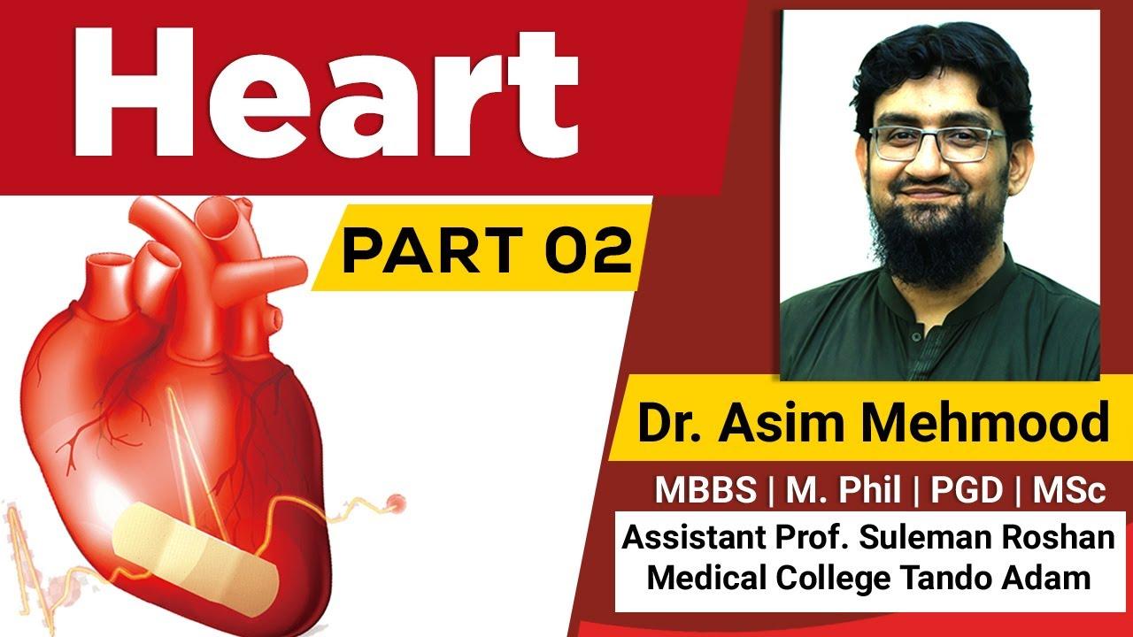 Biology of Human Heart Part 02 ( Hindi / Urdu ) - YouTube