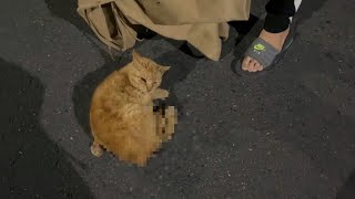 車に轢かれていた猫を救出して保護しました。助かってほしい・・・