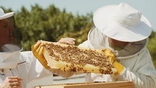 How a NASA engineer built his flow hive on a rooftop in Washington D.C.