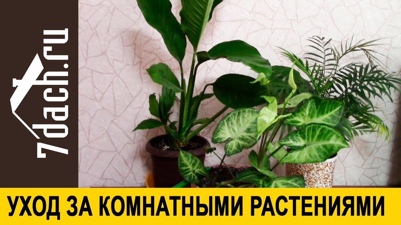 Общие принципы ухода за комнатными растениями осенью и зимой - 7 дач