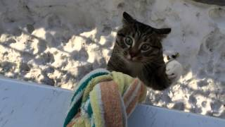 Кот домой пришел / The cat came home thumbnail