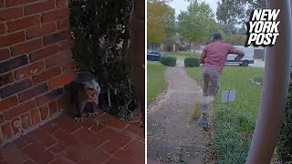 Angry possum sends deliveryman running in terror