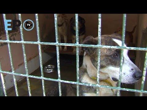 La protectora de animales de Lugo, desbordada