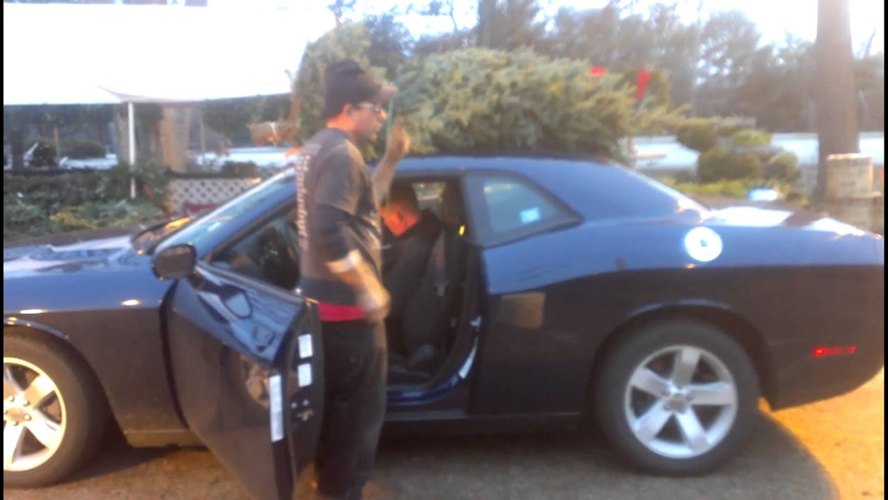 How To Tie A Xmas Tree On A Car YouTube - Christmas Tree On Car