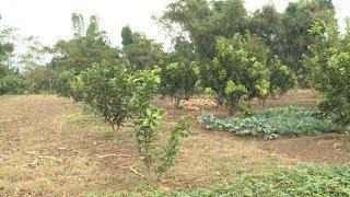 Thực hiện nghị quyết: Thành phố Tuyên Quang xây dựng vùng chuyên canh cây trồng giá trị cao