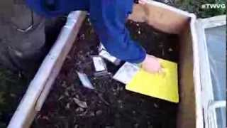 Planting the Cold Frame and Growing Kale In a Bucket The Wisconsin Vegetable Gardener Extra 70