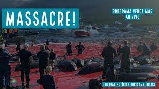 Massacre de baleias nas Ilhas Faroe, Jubartes pelo Rio de Janeiro e mais notícias socioambientais