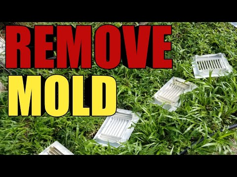 how-to-remove-mold-from-ac-vent-and-air-duct-!!!!????you-shoud-do-that-100%-......