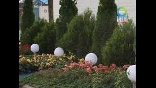 Озеленение территории Гродненской табачной фабрики