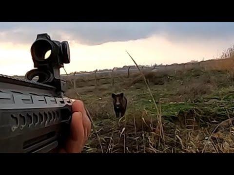 Bol aksiyonlu harika çekim yaban domuzu avı./Wild boar hunting.