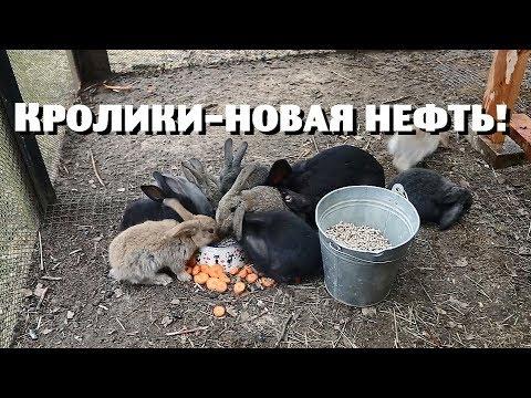 КРОЛИКИ-НОВАЯ ДЕРЕВЕНСКАЯ НЕФТЬ!